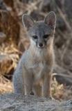 fox-kit_4948894181_l