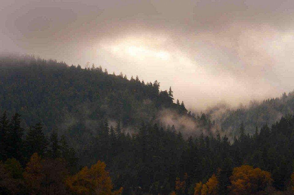 Northern Ca Redwoods