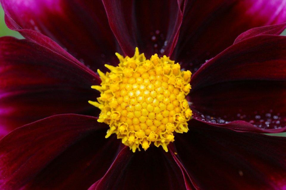 Flower-Center_4788005827_l