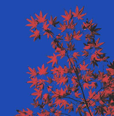blood-leaves