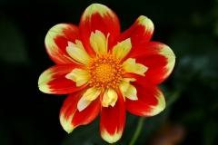 Flower_4788006939_l