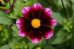 Flower_4788636986_l